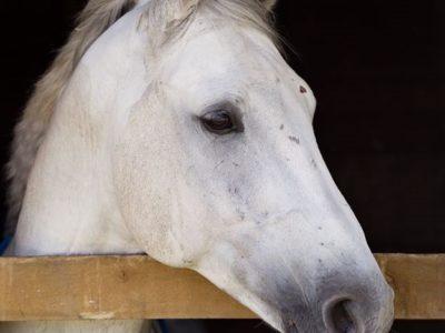 find equine vet