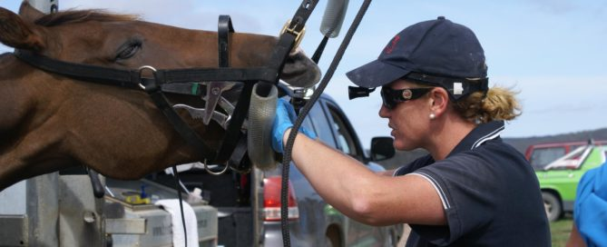 equine dentistry tutorial how to care for your horse's teeth and mouth