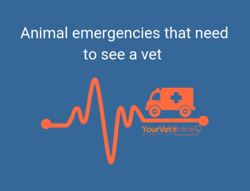 Emergency vet care for your pet