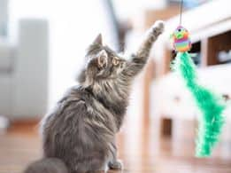cat playing with fishing line